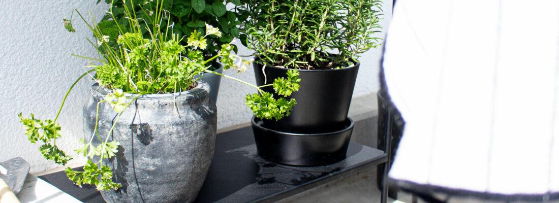 DIY: Kräutergarten auf dem Balkon